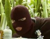 El ladrón se pone cachondo mirando y la tia lo busca y se la chupa